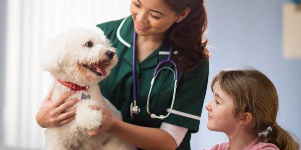 Haustier Medizinische Versorgung