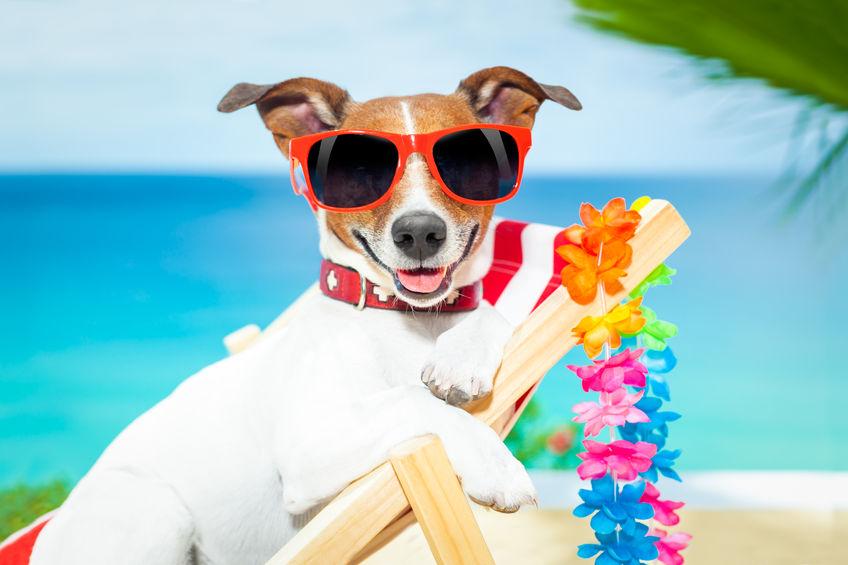 Haustier Urlaub